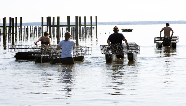 Oyster raft in Maryland