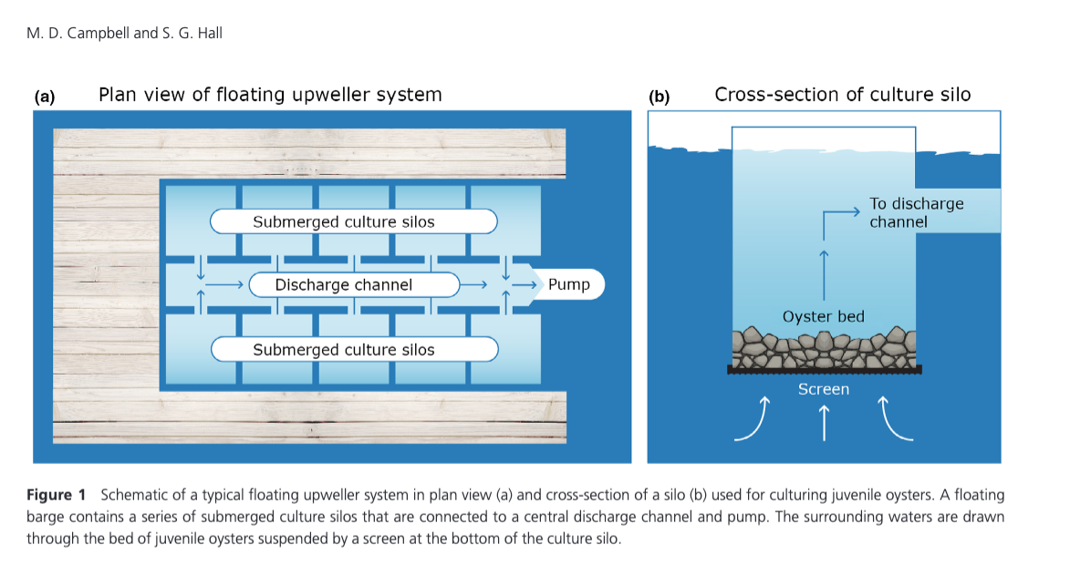 Hydrodynamic effects on oyster aquaculture systems: a review