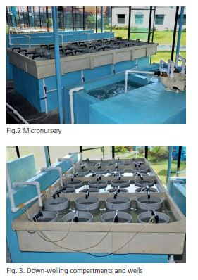 Micro oyster hatchery for mussels