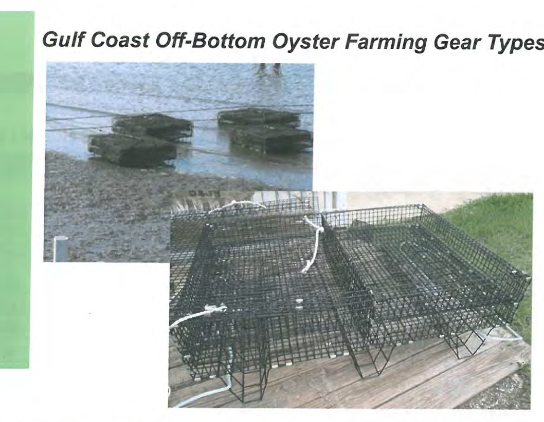Oyster growing gear type and P&L comparison