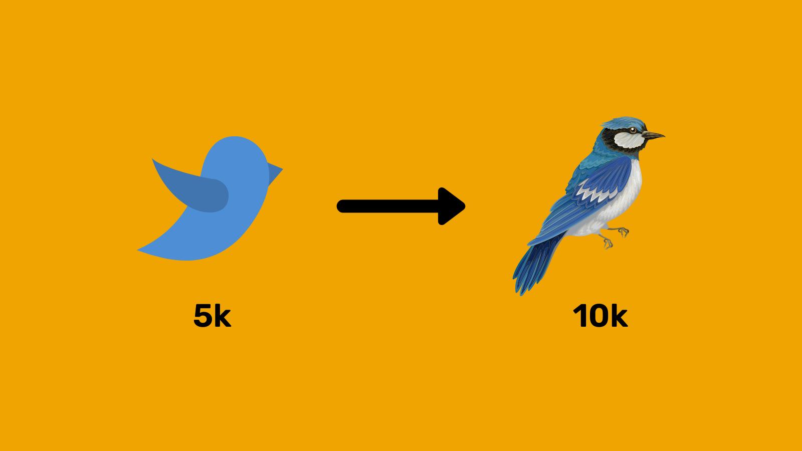 From 5k to 10k followers on Twitter - The Journey
