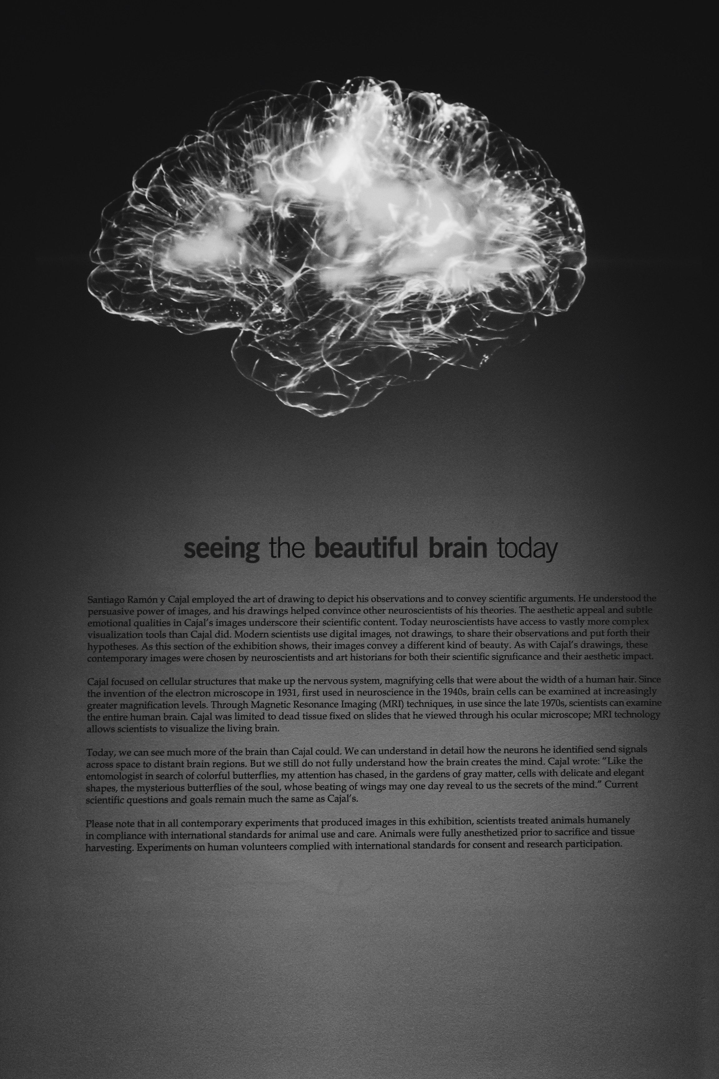 Making Your Brain Your Ally