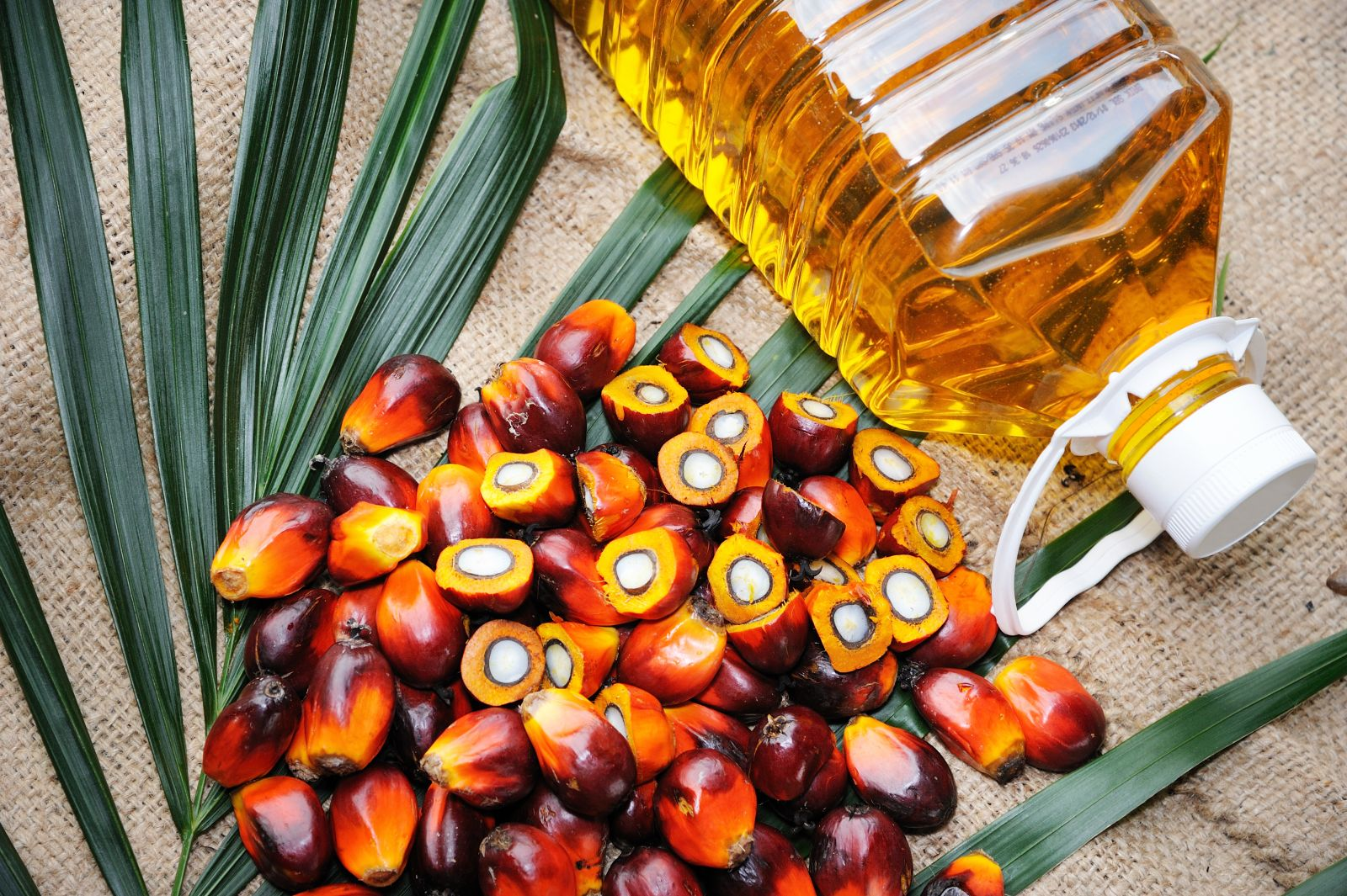 Our Qualm with Palm Oil