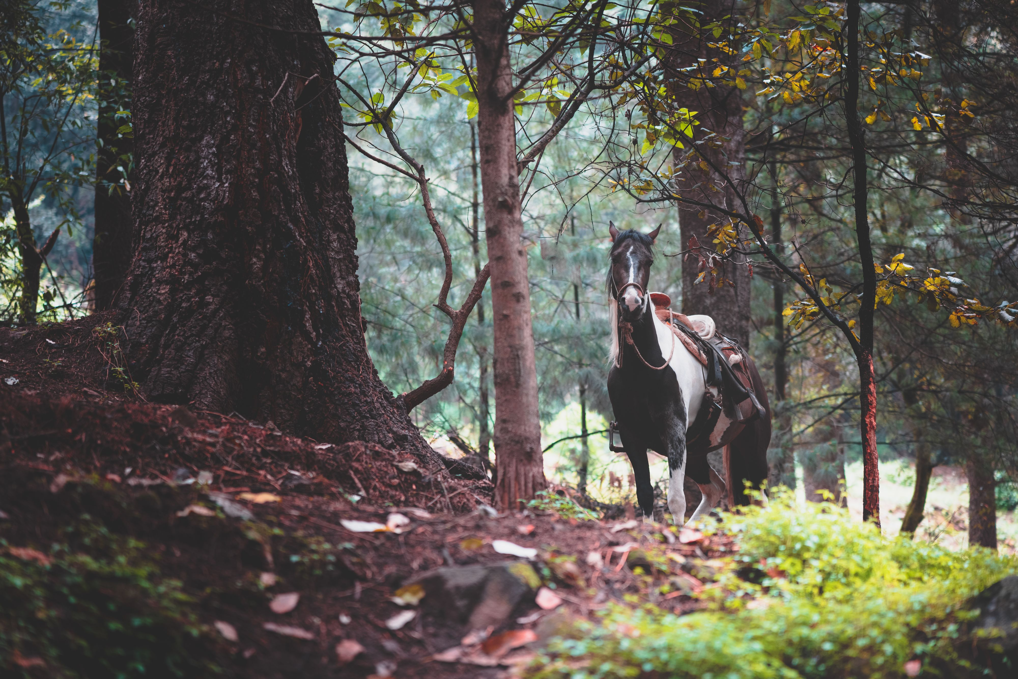 A trip to the forest in Mexico City